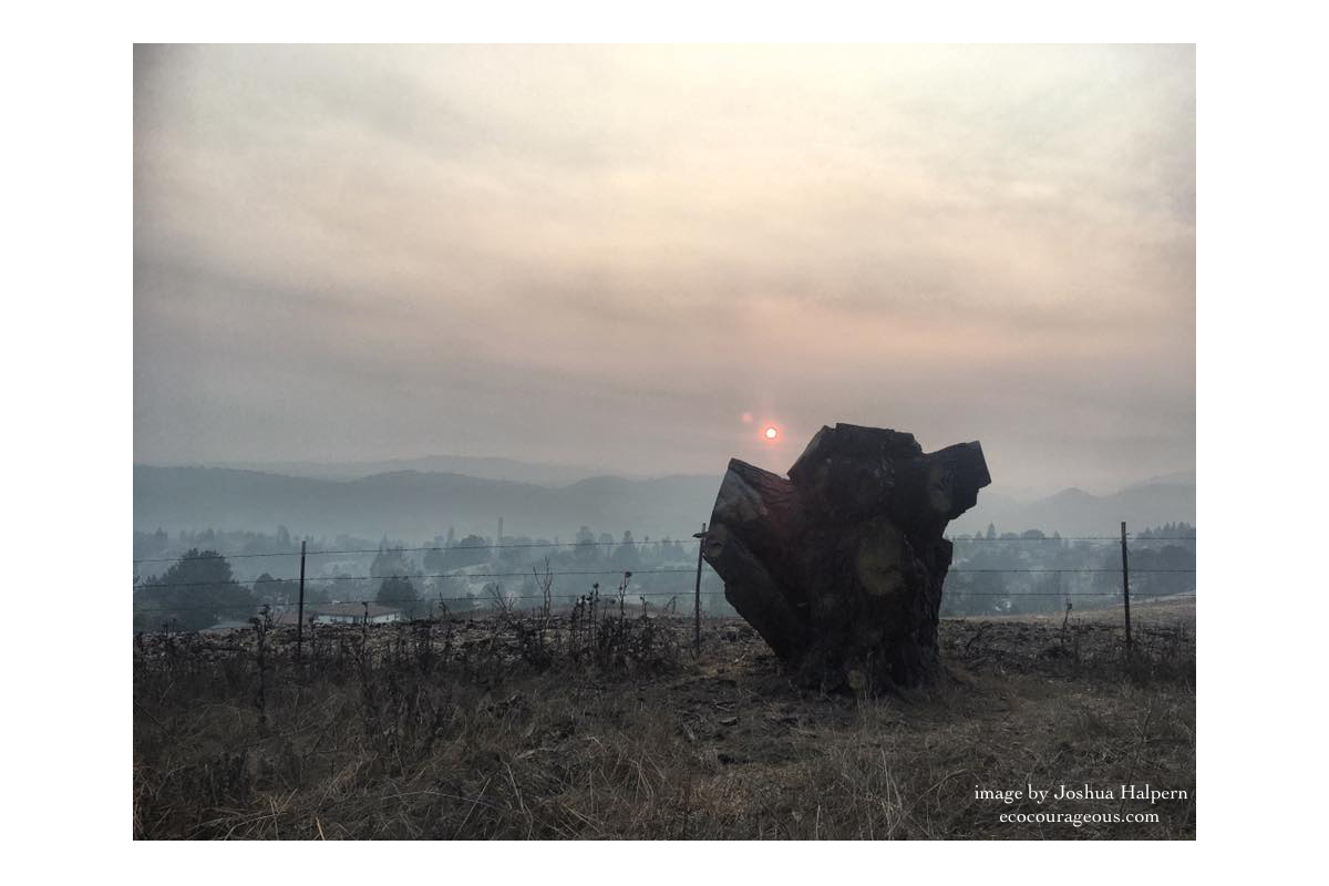 Tree stump in the smoke-filled East SF Bay Hills during the Camp Fire; Fall 2018